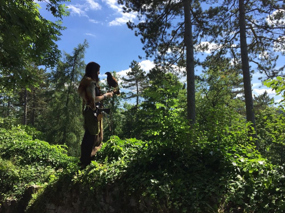 德國圖特林根森林中的持鷹女孩