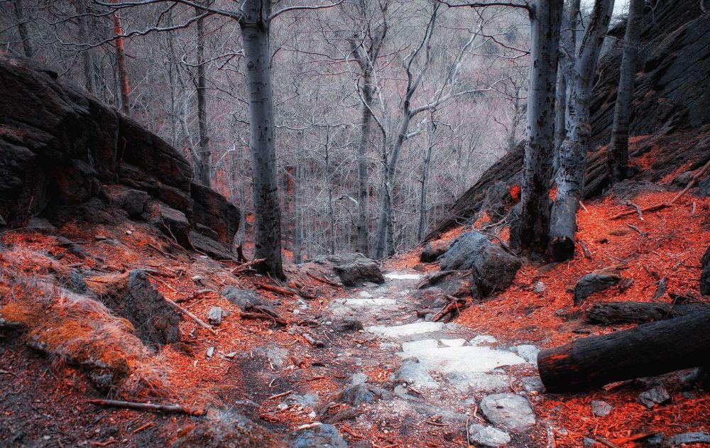波蘭克爾科諾謝山的森林景色