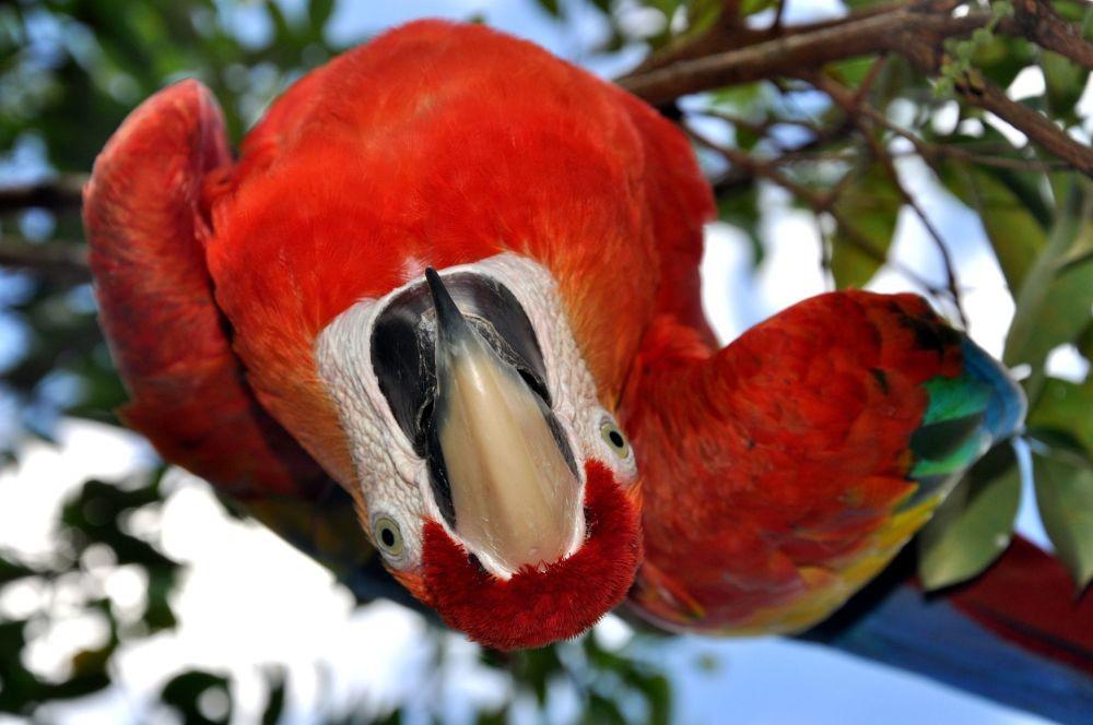 委內瑞拉森林中的鸚鵡