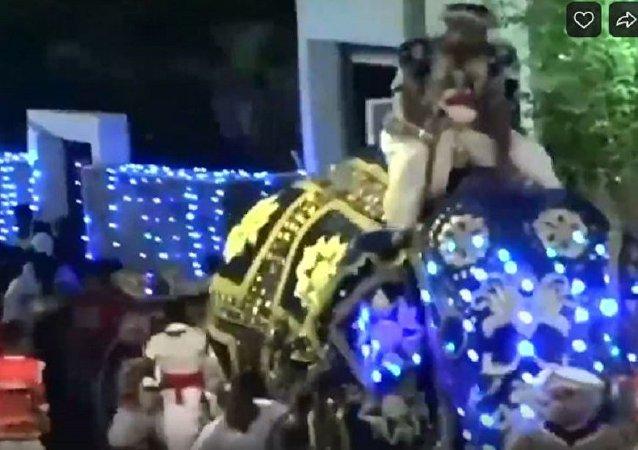 大象在斯里蘭卡的遊行上發怒