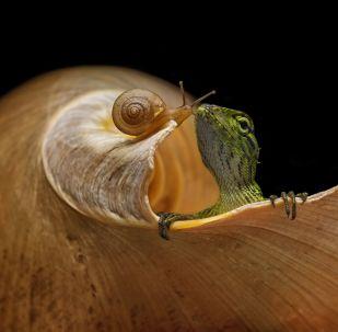 蜥蜴和蝸牛。作者:Andi Halil(印度尼西亞)。