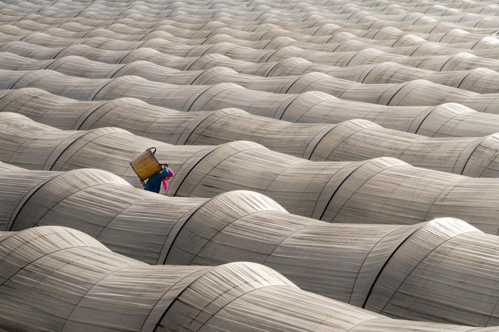 种草莓的温室。作者:Leyla Emektar(土耳其)。