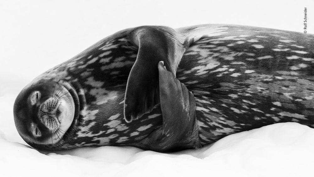 2019年度國際野生動物攝影師大賽遴選出的15幅最佳作品