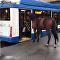 俄罗斯一匹想坐公交车的马