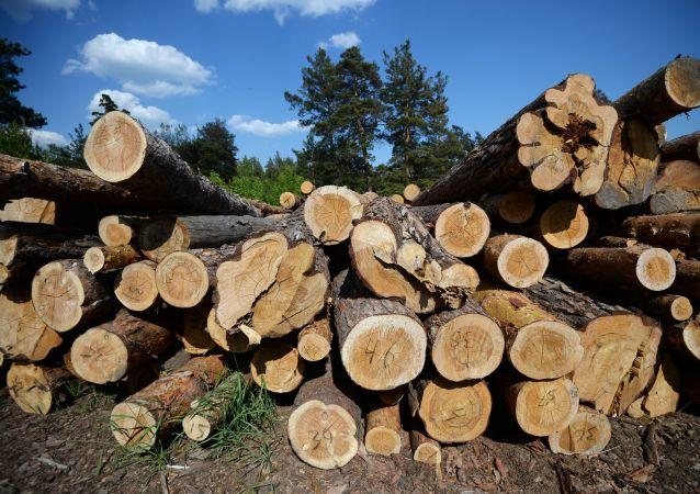 俄羅斯駐華大使稱中方願意討論對華木材出口方面的問題