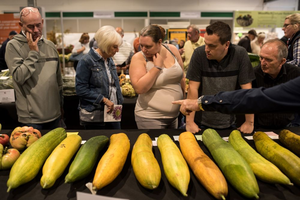 大小很重要:讓你驚掉下巴的巨型蔬菜