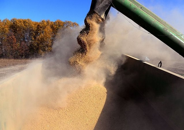 俄滨海边疆区10月向中国出口约7万吨大豆和玉米