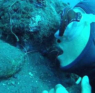 """潜水员让海蜘蛛爬进嘴里""""清洁牙齿"""""""