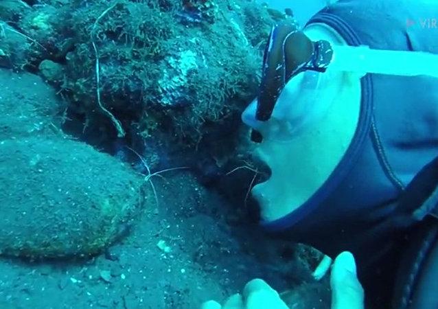 潛水員讓海蜘蛛爬進嘴裡「清潔牙齒」