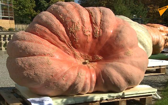 超過一噸重的南瓜