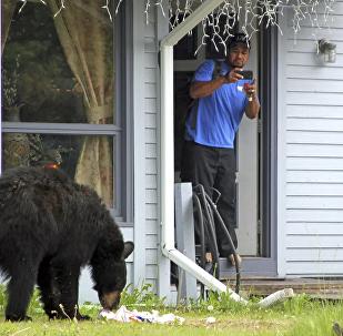 美国一家遭熊光顾 主人在楼上全然不知