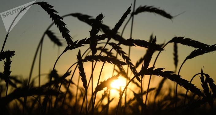 中国驻俄使馆:俄中一定要发展农业合作