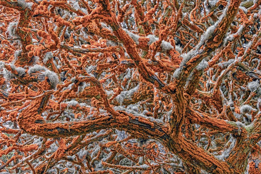 塞尔维亚裔美国摄影师Zorica Kovacevic的作品《Tapestry of life》获得大赛Plants and Fungi类别冠军