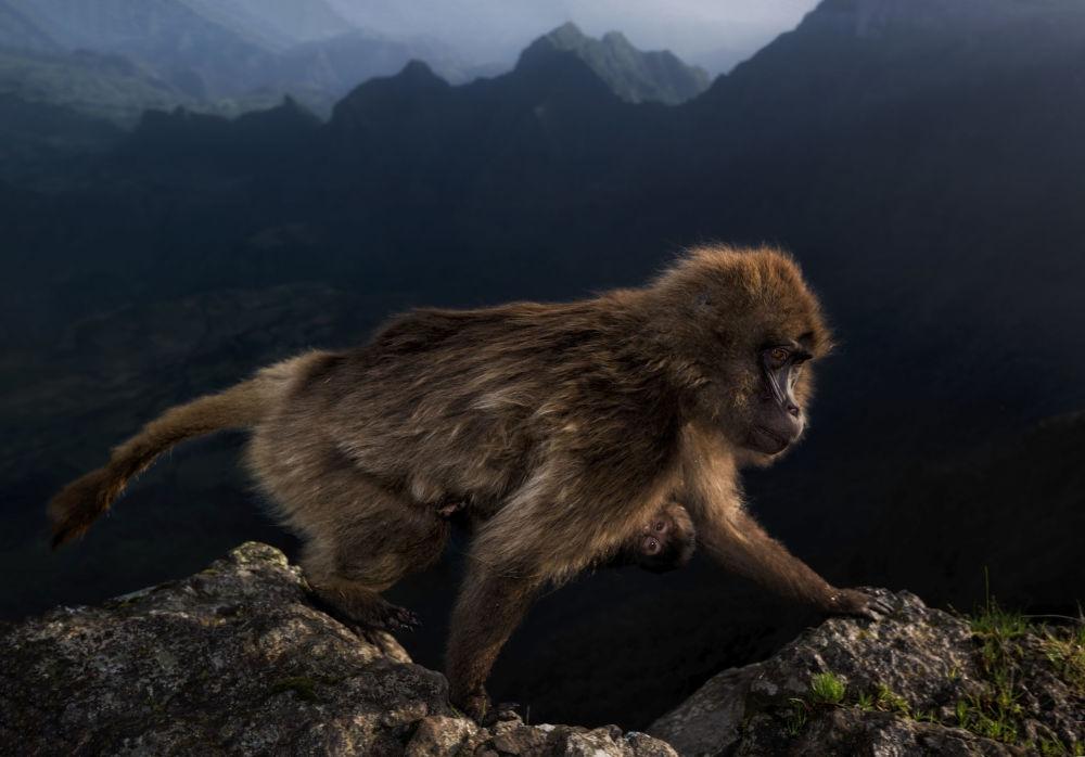 意大利摄影师Riccardo Marchgiani的作品《Early riser 》获得2019年度野生动物摄影师大赛15-17 years old 类别冠军