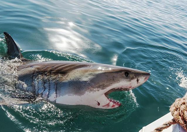 澳大利亚发生鲨鱼袭击游客事件