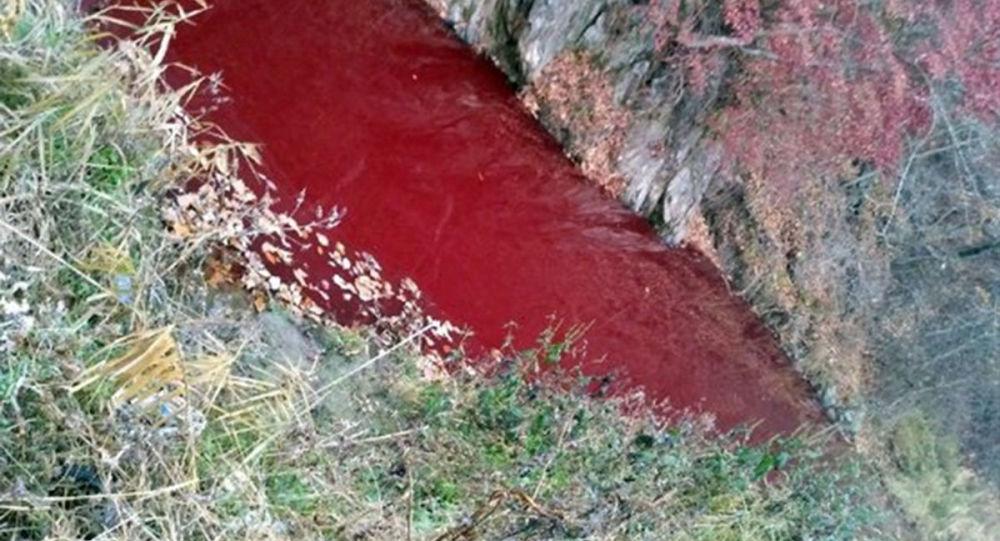 朝鲜半岛上的河流被猪血染红