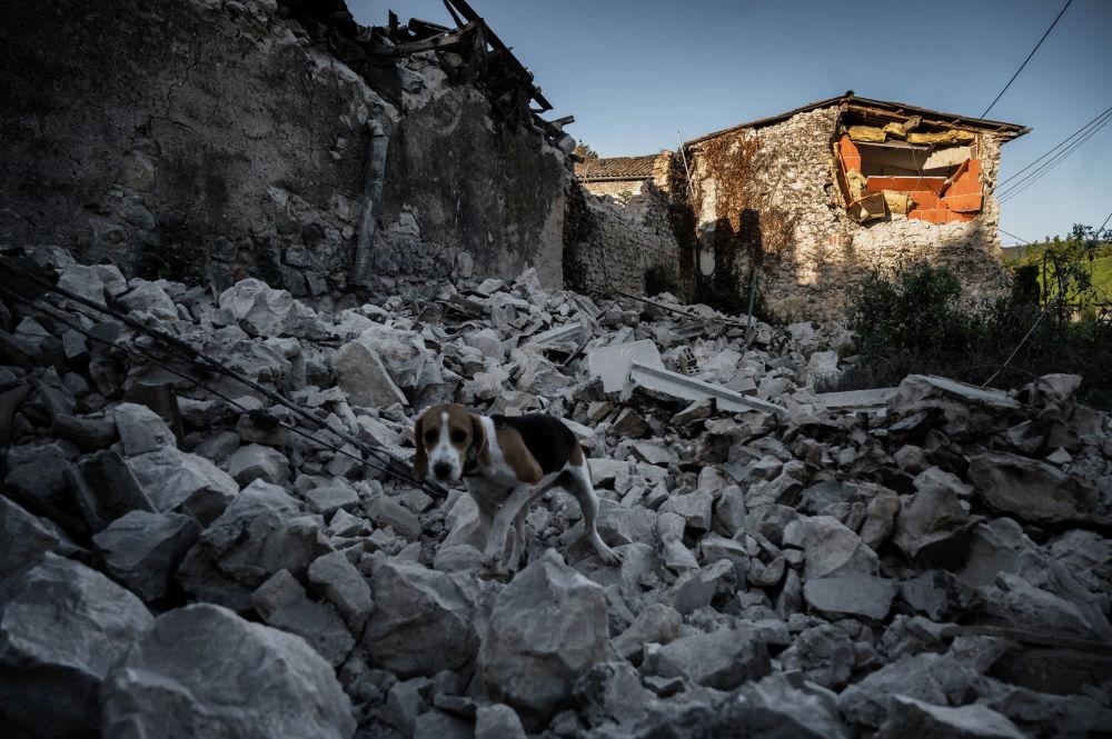 法国东南部拉罗歇尔市鲁维埃区震后废墟上的一只狗。