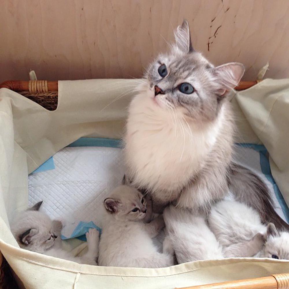 """俄罗斯著名的""""新闻当事猫"""""""