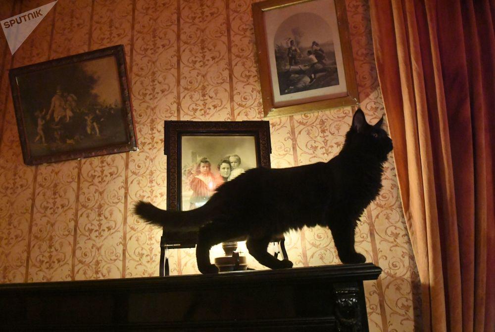 俄羅斯著名的「新聞當事貓」