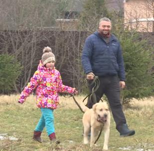 喜欢旅行的拉布拉多犬被送回家