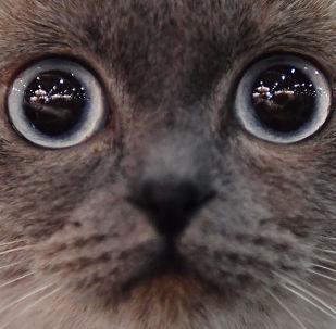中国人在2019年的猫狗宠物支出超过280亿元