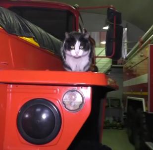消防队里的吉祥物猫咪
