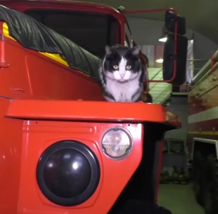 +消防隊裡的吉祥物貓咪
