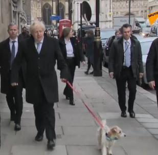 鮑里斯·約翰遜帶狗去投票