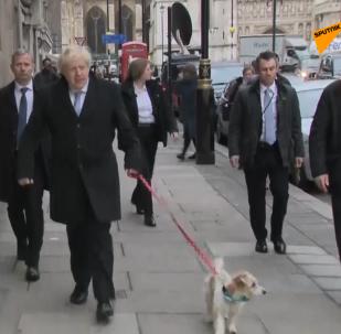 鲍里斯·约翰逊带狗去投票