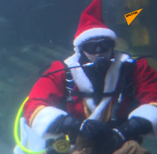 聖誕老人在柏林水族館餵魚
