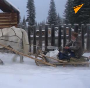 原始森林的邮寄员乘雪橇送信